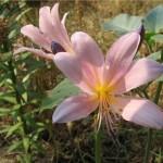 Красивые эффекты из цветов для дома