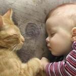 Ребёнок и кошка – семейный тандем