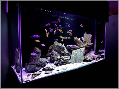 Качество и обслуживание аквариумов зависит от выбора производителя