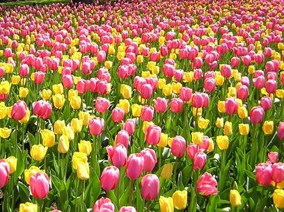 Самый любимый цветок