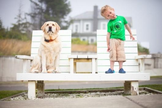 Выбор домашнего «питомца» - пес или кот, с кем повезет…?