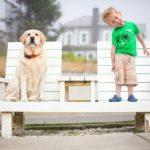Выбор домашнего «питомца» — пес или кот, с кем повезет…?